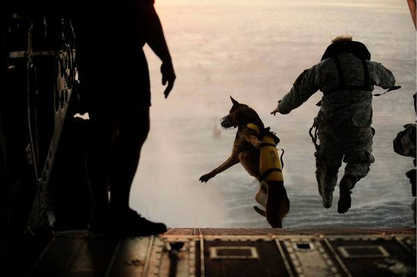 Soldier and dog skydiving
